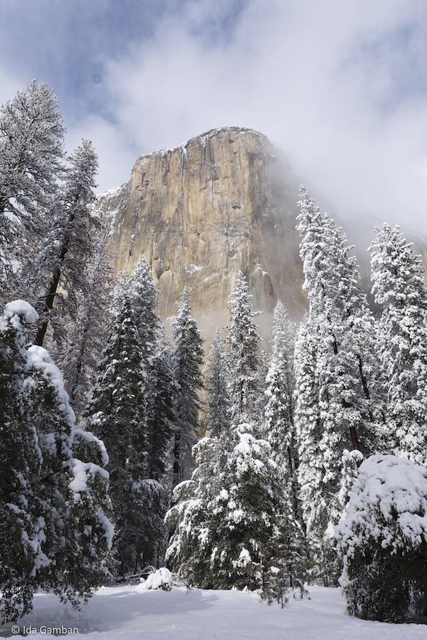 Embraced El Capitain, Yosemite by Ida Gamban